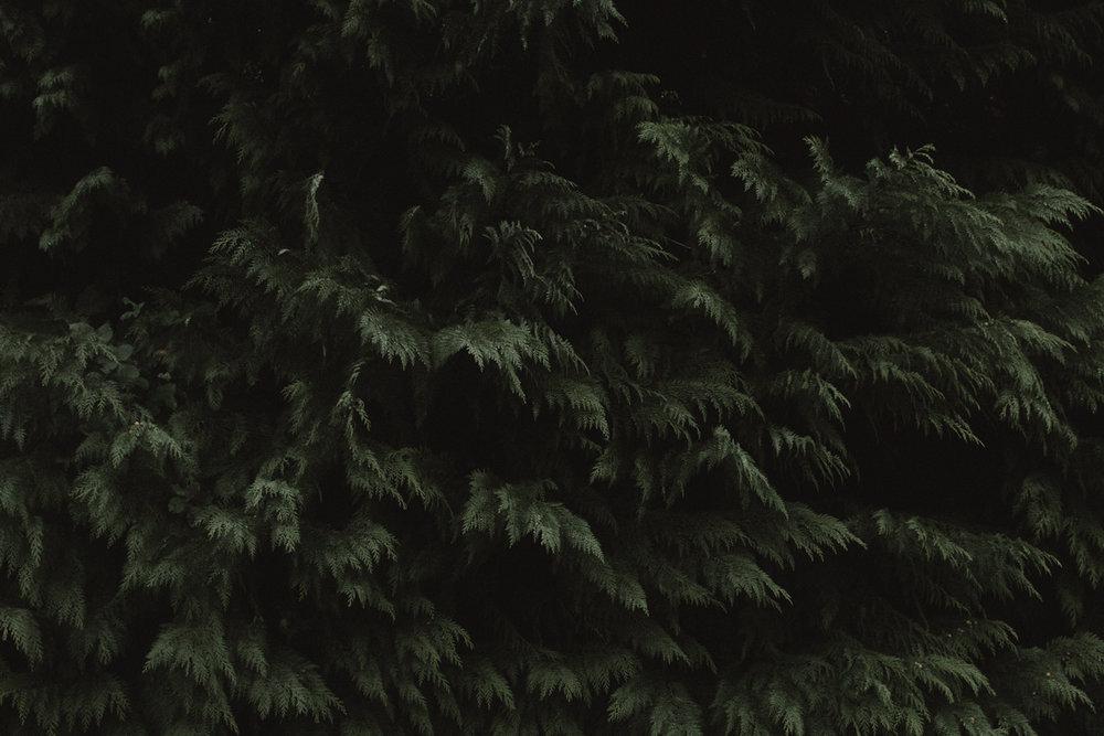 redwoods-08.jpg