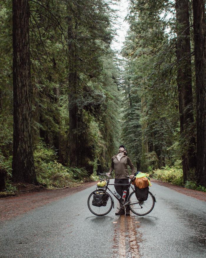 redwoods-02.jpg
