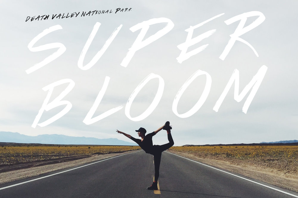 SUPER BLOOM: DEATH VALLEY
