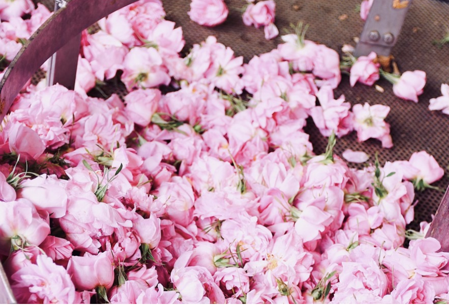 Calling a Rose a Rose: Interview With Jo Malone