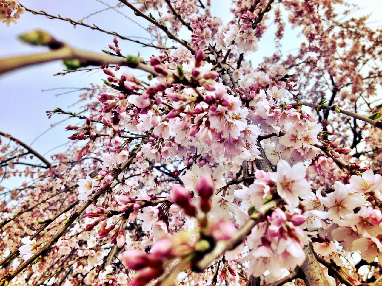 130405, spring, finally.