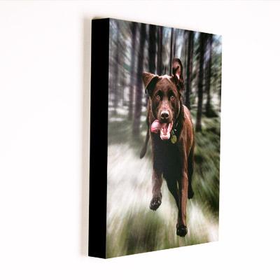 DogBox.jpg