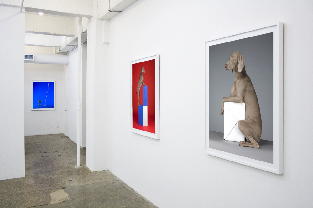 William Wegman:  Cubism and other -isms