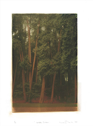 White-Cedars.jpg