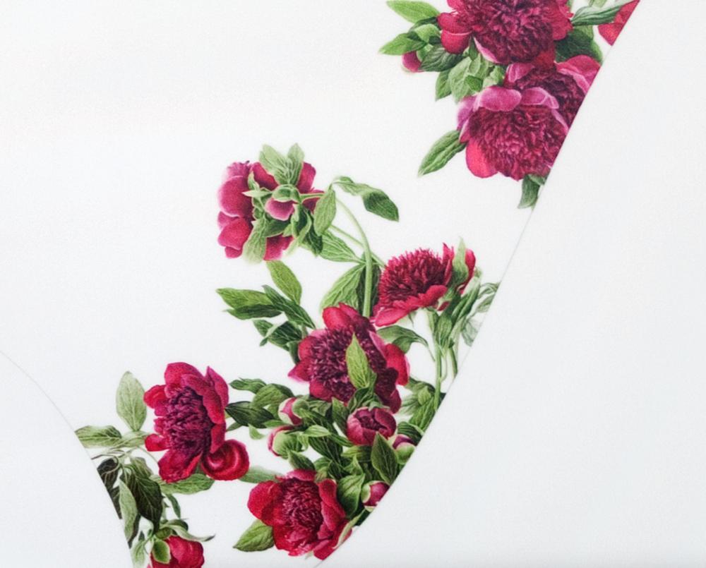 Hybrid (Paeonia) - Detail