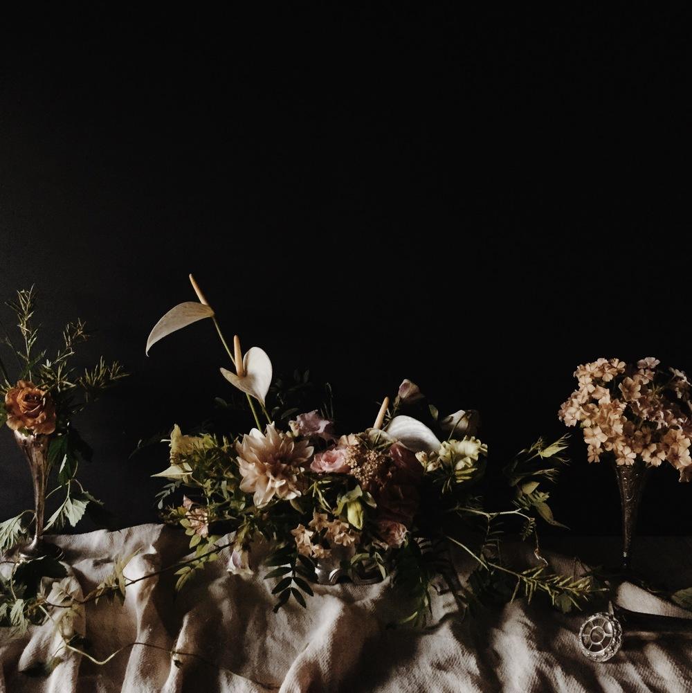 Vervain moody summer flowers 01