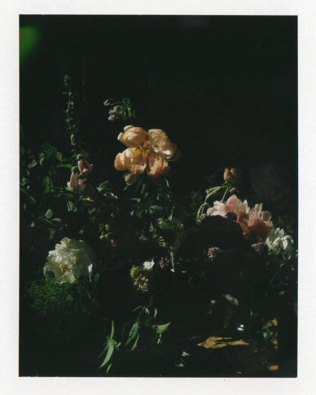 vervain polaroid image vase arrangement 02