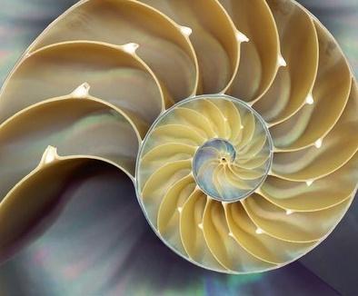 nautilus schelp.jpg