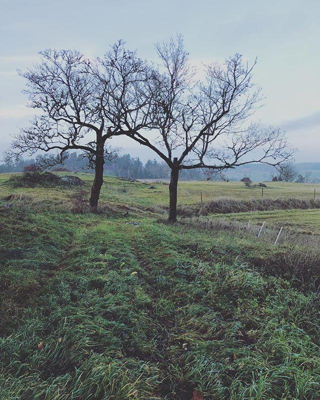 A visit to the countryside. – #tree #countryside #mushroom #mushrooms #foraging #södermanland #sörmland #trattkantarell #trumpetsvamp #svarttrumpetsvamp #kantareller #taggsvamp #svamp #svampplockning
