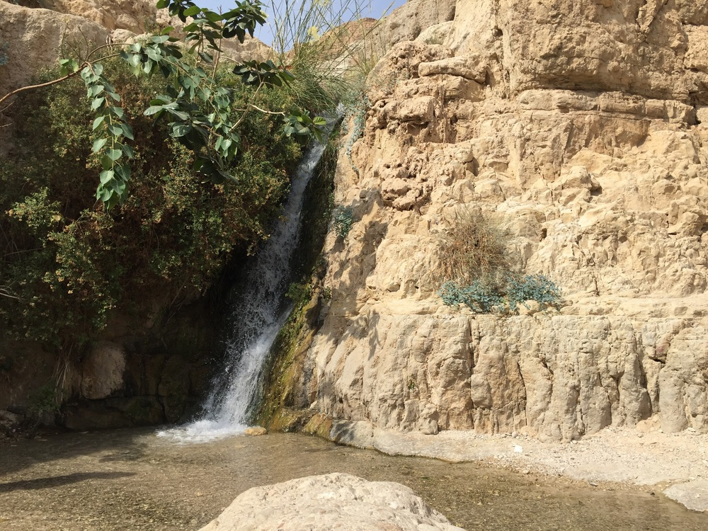 The spring of En-Gedi.