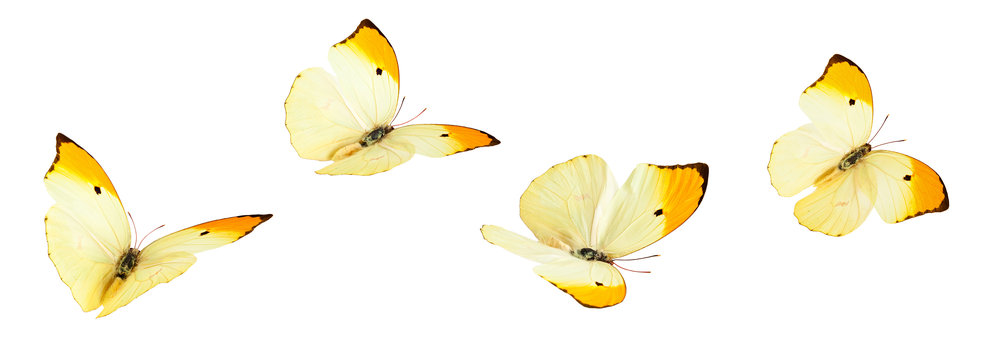 butterflies copy.jpg