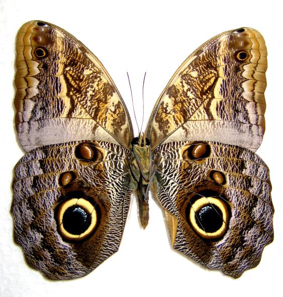 butterfly_eye.jpg