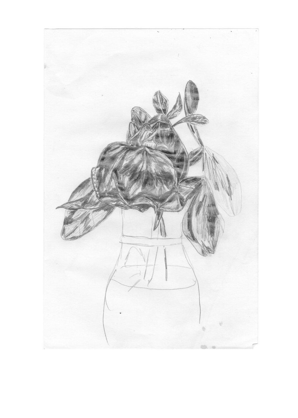 dead rose pencil.jpg