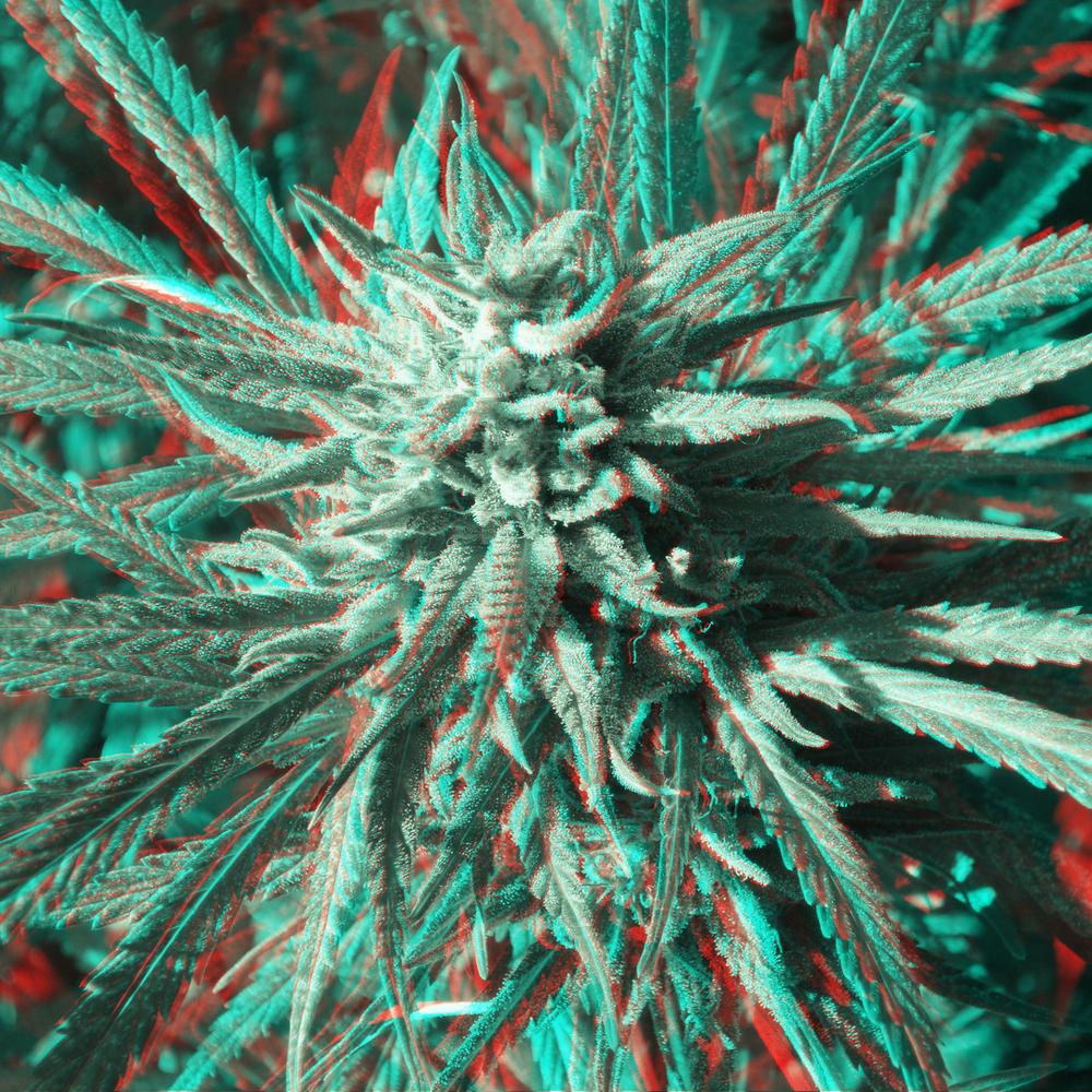 flower#5-3.jpg
