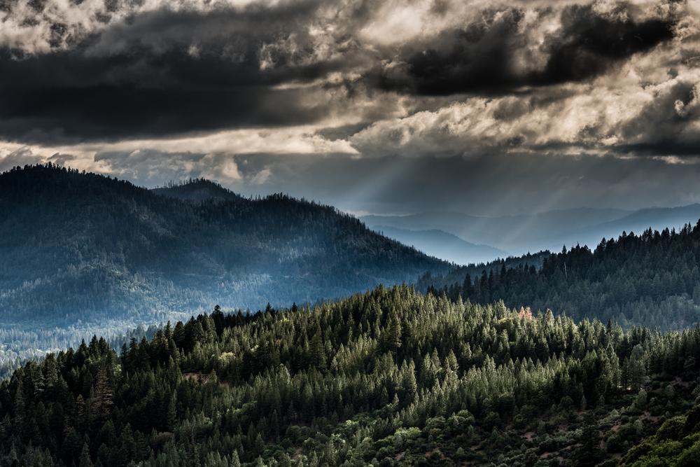 TT Landscape.jpg