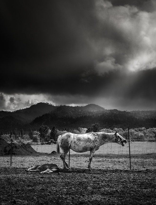 Hyampom Horse Web.jpg