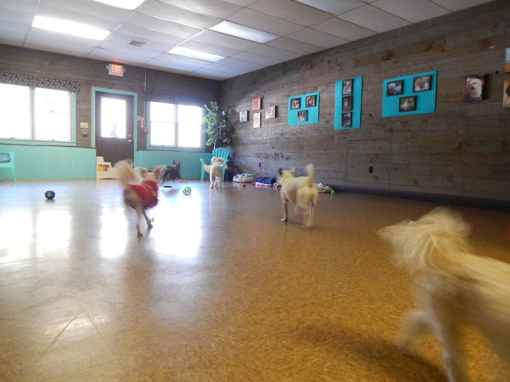 bldg small dog play area.JPG