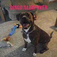 DISCO SLEEPOVER 4.jpg