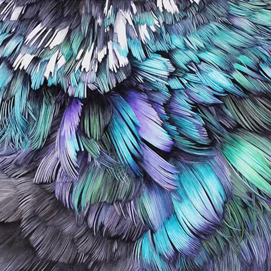 Feather Wall by  Adele Renault