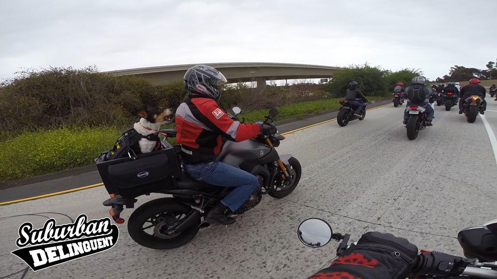dog-riding-motorcycle-barking.jpg