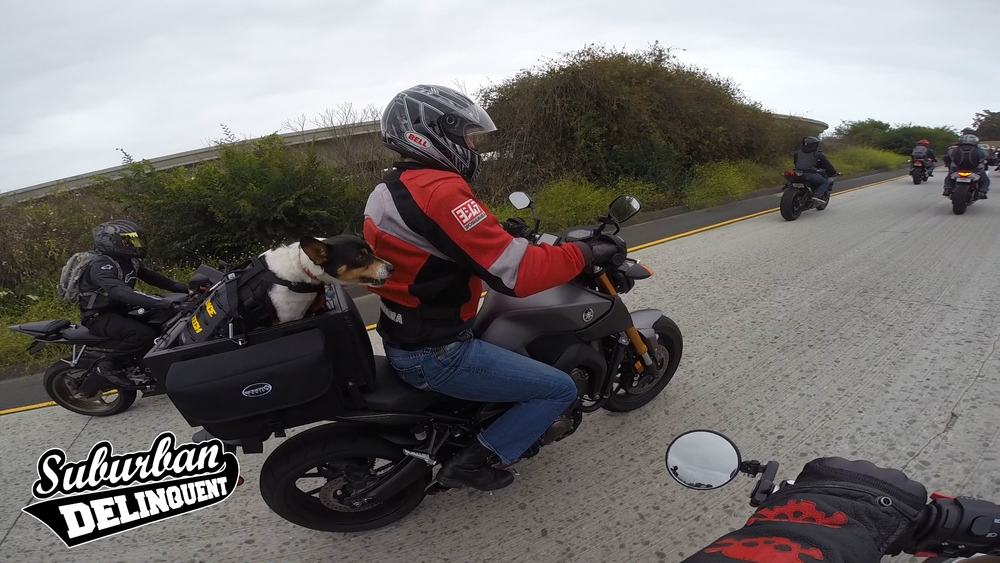 dog-riding-motorcycle.jpg