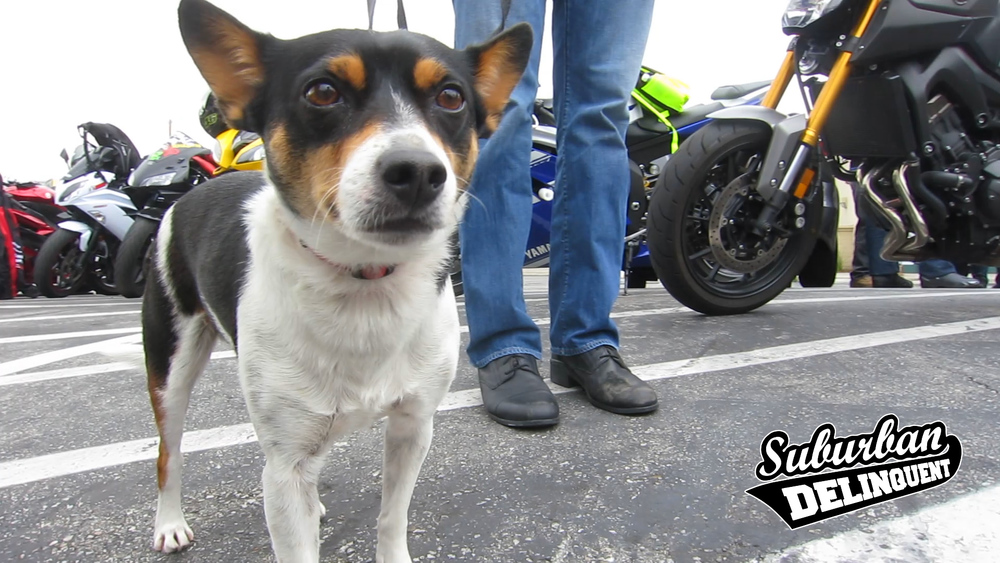 motorcycle-dog-socal.jpg