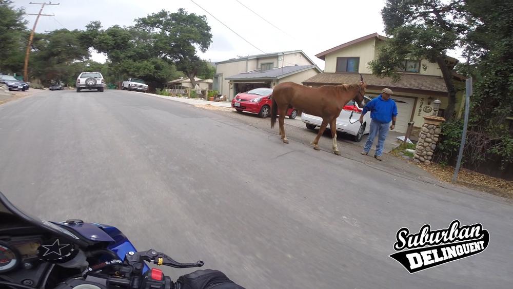 horse-motorcycle-trabuco-canyon.jpg