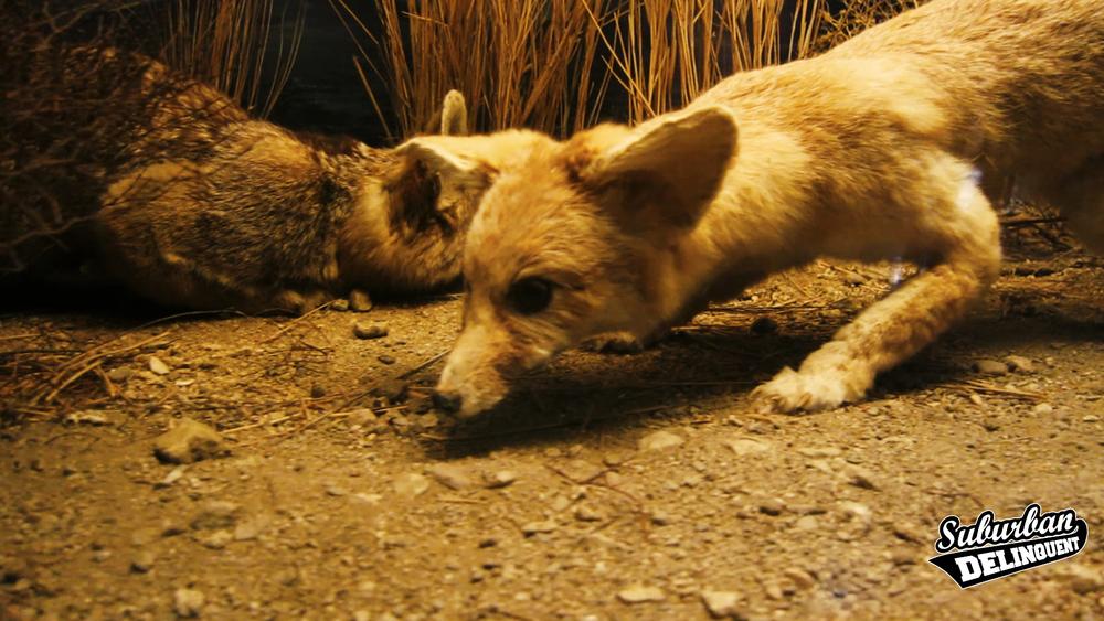 curious-dog-museum.jpg