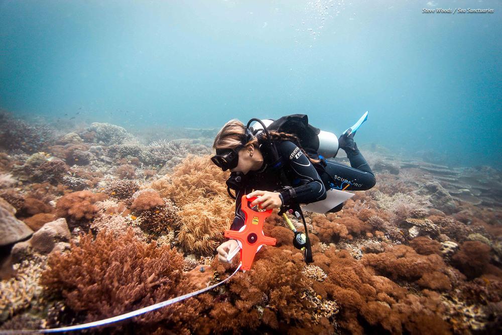 Reef Survey Nusa Lembongan Bali