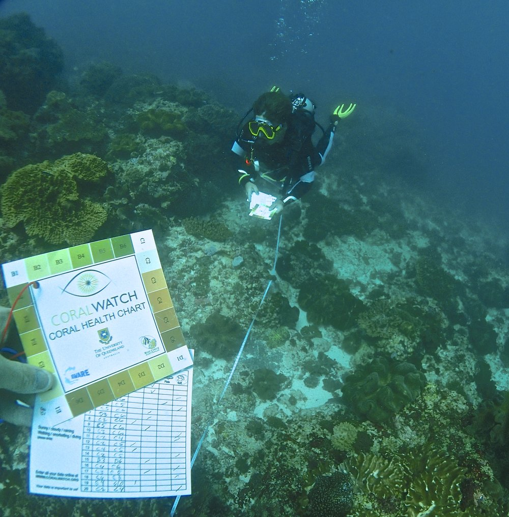 coral watch coral bleaching monitoring