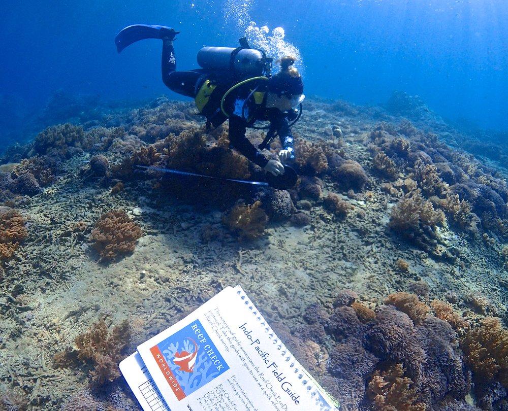 Reef check surveys in bali