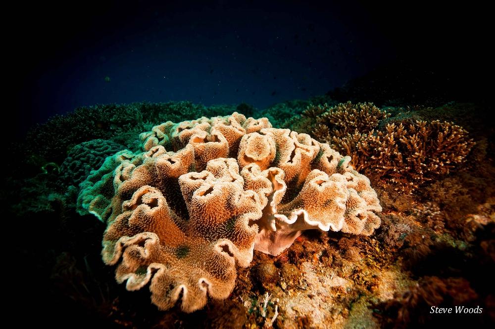 PADI Coral Reef, Bali, Indonesia
