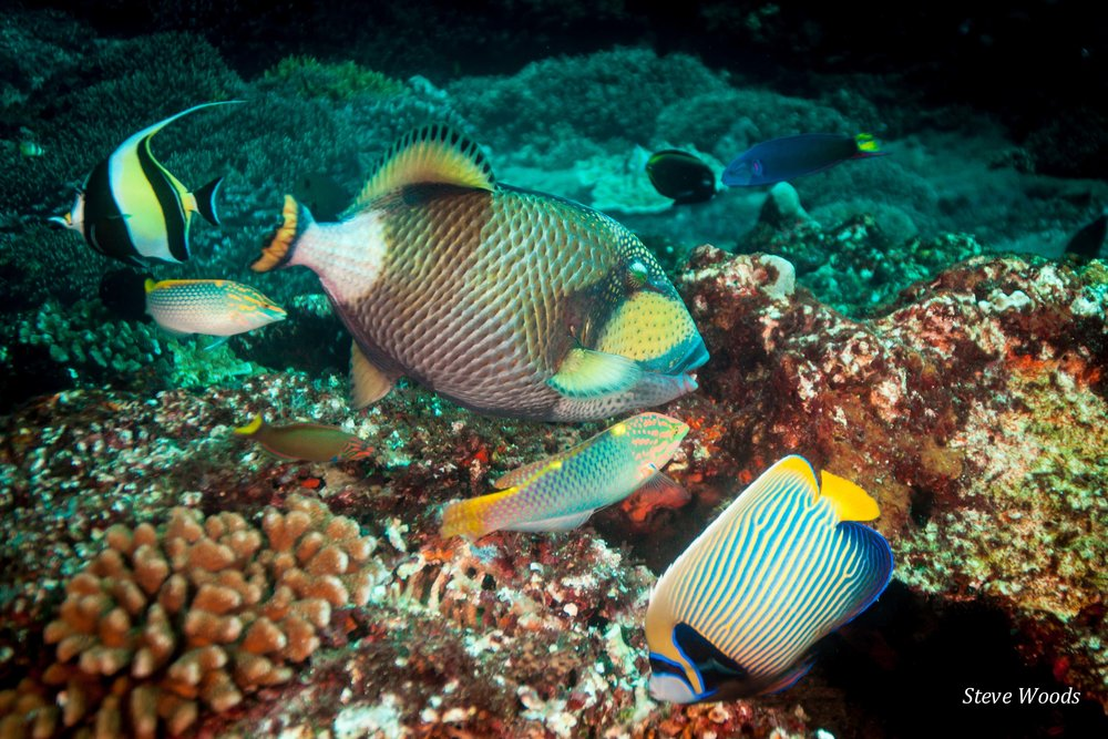 Indonesian reef fish