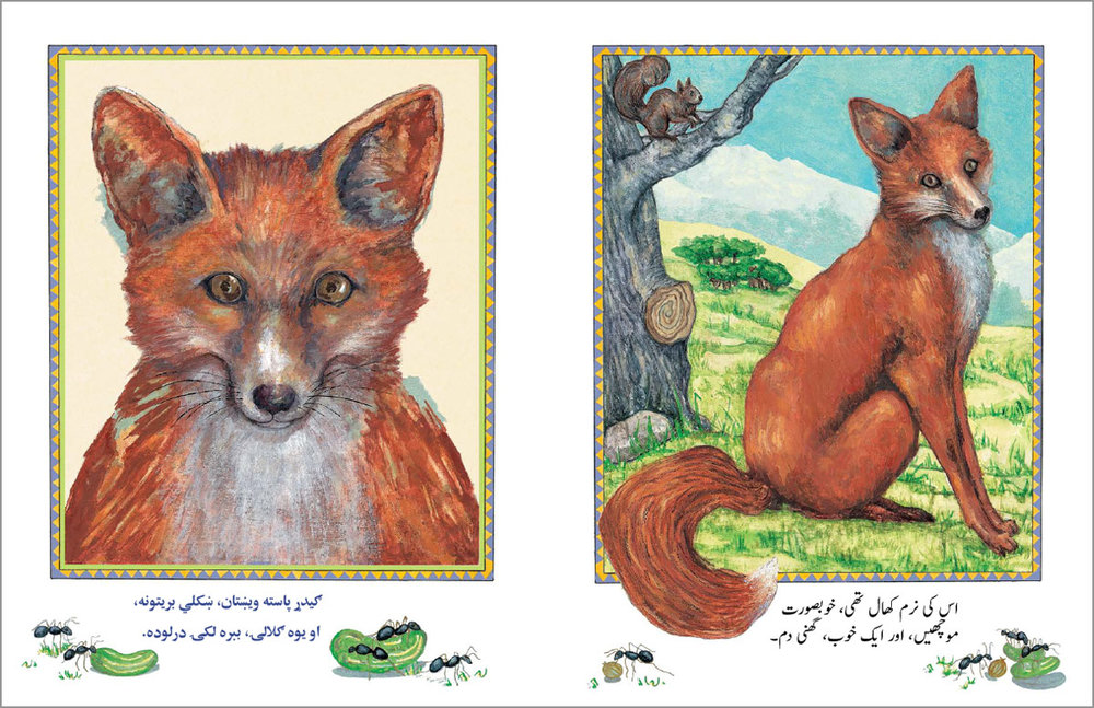 Man-and-the-Fox-URDU-PASHTO-spread2.jpg