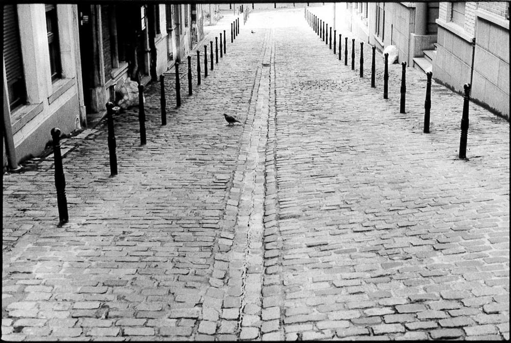 pigeon Bruxelles-2.jpg