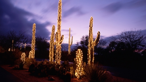 christmas-light-leina.jpg