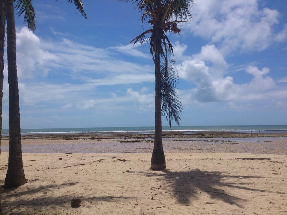 tropical_shadow_leina_swimwear.jpg