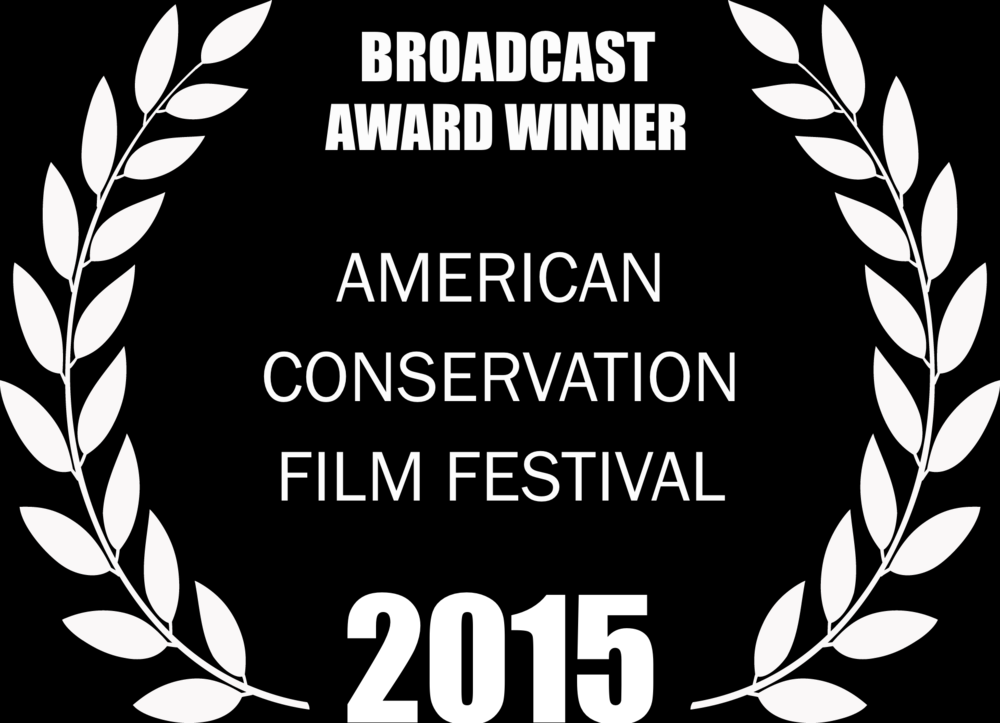 2015_Broadcast+Winner+Laurels.png