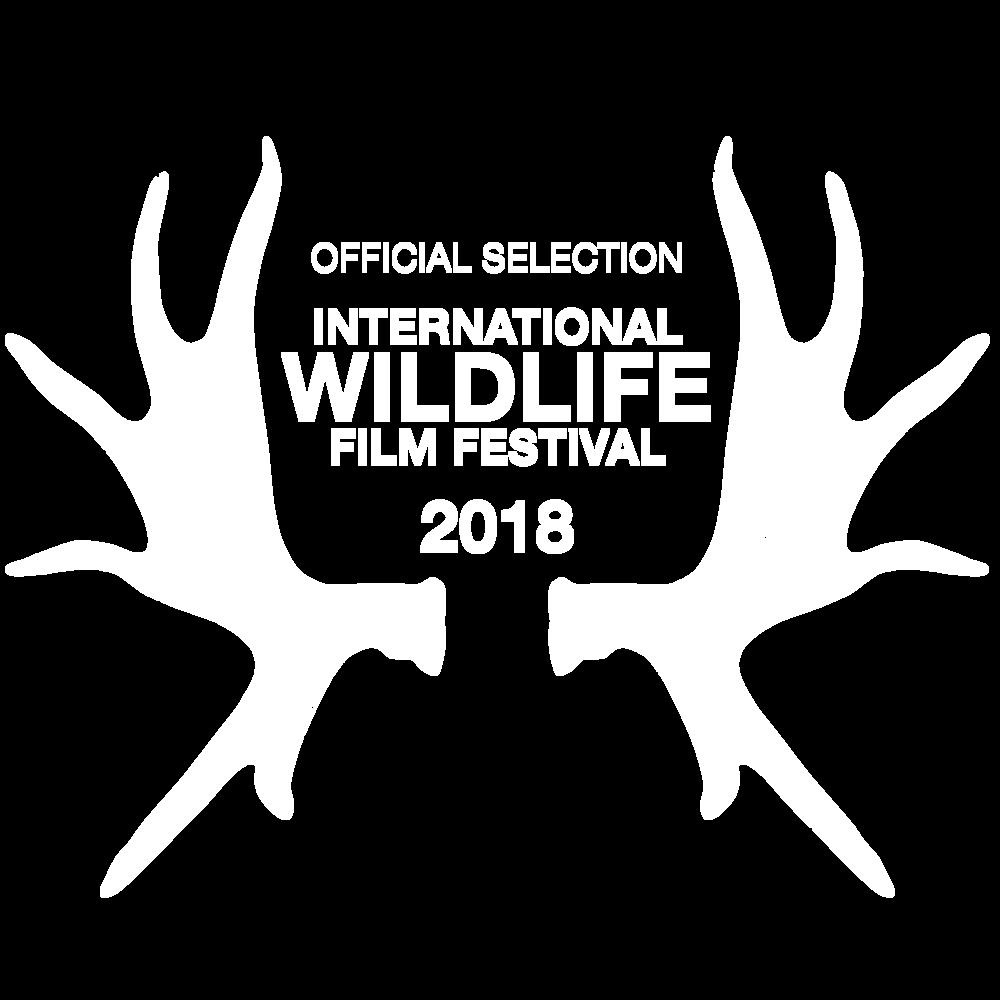 2018_IWFF_Laurels_white.png