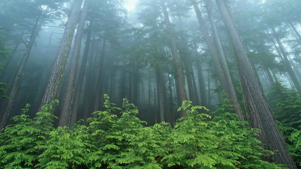 SHORT:  Treeherd Potemkin