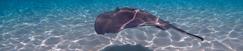 Stingray City Cayman Islands.jpg