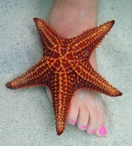 Starfish Point - look how clear the water was - like it was not there!