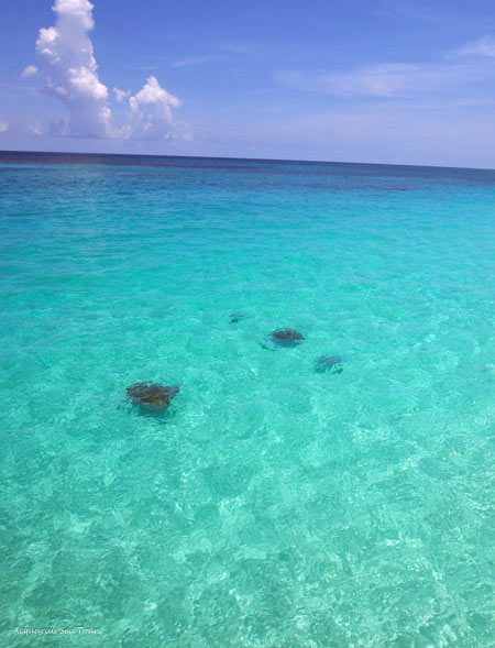STINGRAY CITY - A VIEW