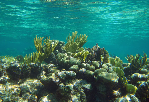 GRAND CAYMAN BARRIER REEF