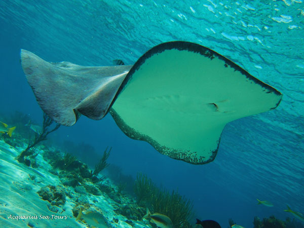 Stingray City beauty