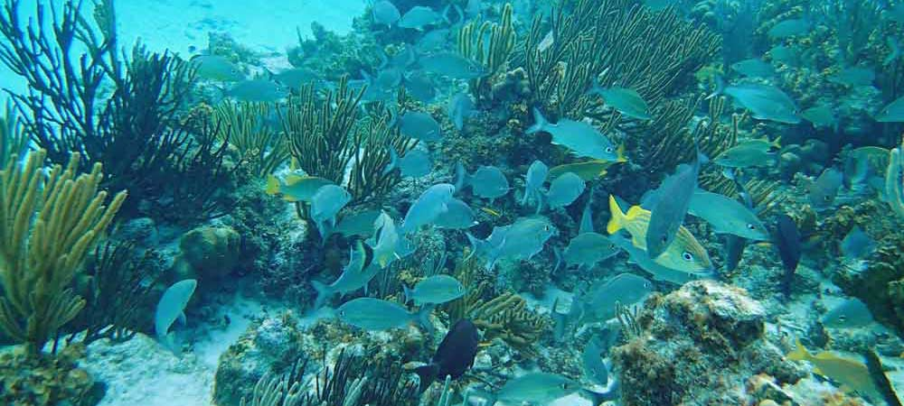 A school of Grunts surround us while snorkelling