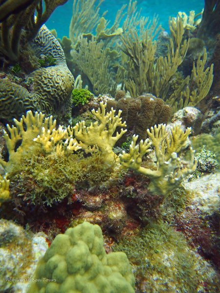 REEF GRAND CAYMAN