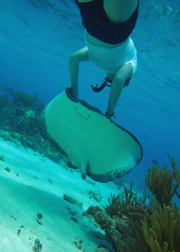 grand-cayman-stingrays-28011503