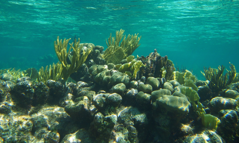 The stunning beauty of Grand Cayman's barrier reef