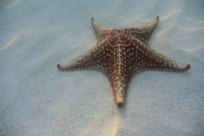 STARFISH DELIGHT